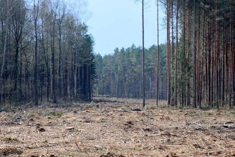 Trwają przygotowania do budowy obwodnic Starachowic i Wąchocka. Na razie wycinane są drzewa ale widać już ślad nowej trasy (ZDJĘCIA)