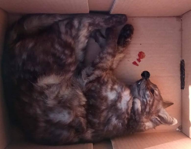 W Lesku przy ulicy Stawowej zginęło 8 kotów.