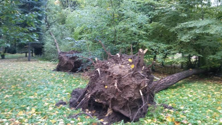 Park żywiecki został zniszczony przez orkan Ksawery nawet w 1/5