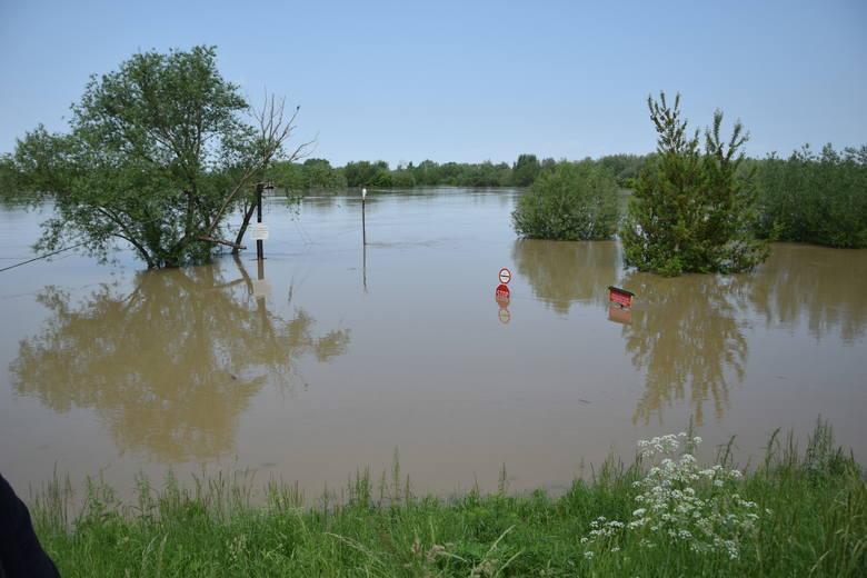 Tarnobrzeg. Wysoki, ale stabilny poziom wody w Wiśle. Zobacz najświeższe zdjęcia