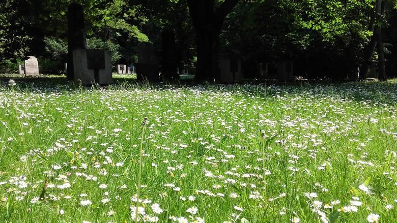 - Zakładanie łąk kwietnych zastępujących istniejące trawniki wiąże się ze zmianą sposoby użytkowania terenów, a także ze zniszczeniem naturalnych siedlisk.