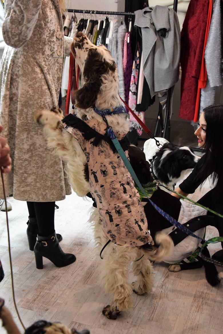 """Natalia Ślizowska zorganizowała pokaz mody dla czworonogów. Ale nie tylko! W pracowni Natalii (znanej m.in. z udziału w programie """"Project Runway"""")"""