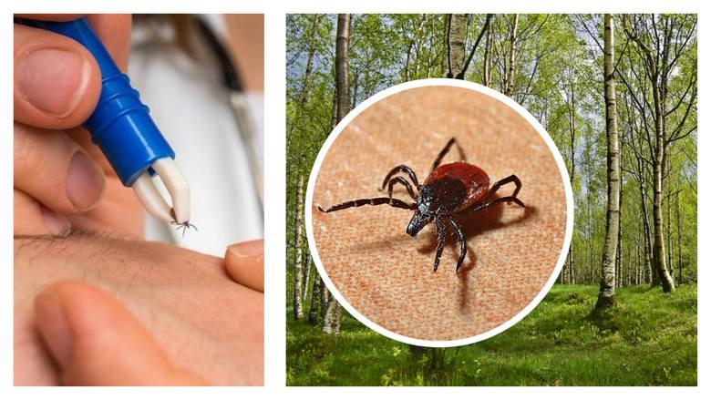 Nie mają oczu, ich ugryzienie nie boli. A jednak - kleszcze stanowią nawet śmiertelne niebezpieczeństwo. Czy wiesz wszystko o tych groźnych pasożytach?
