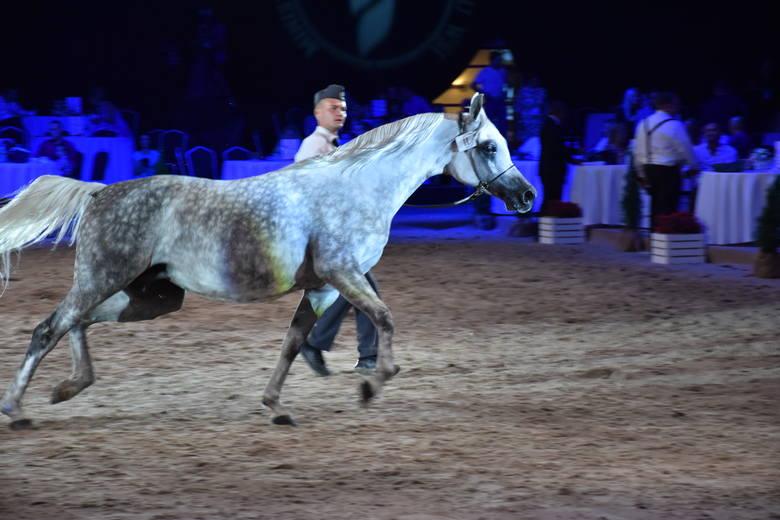 Prezentowanie konia w biegu