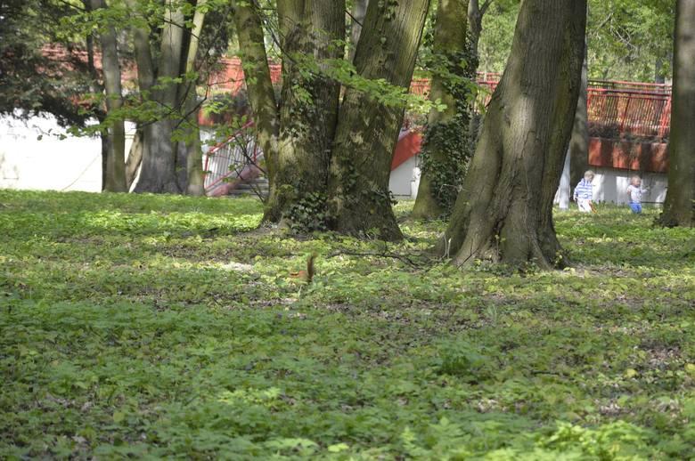 Na rewitalizację Parku Kopernika miasto przygotowało 4,2 mln zł.