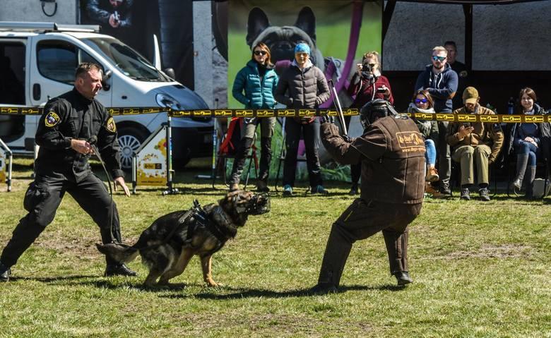 Udział w pokazach szkolenia psów, które pracują z bydgoskimi strażnikami miejskimi, można było wylicytować na aukcji WOŚP