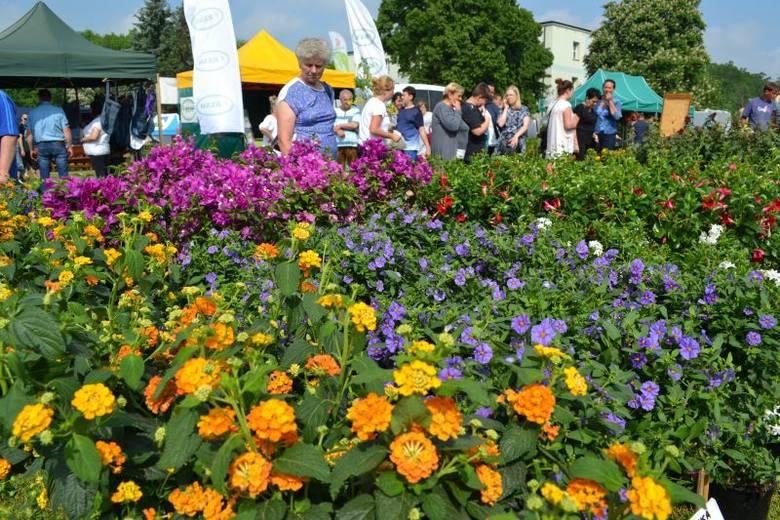 Tysiące roślin, swojskie dania w wykonaniu pań z KGW, wystawa zwierząt. Dziś (12 maja) wystartowały coroczne Targi Turystyczno-Ogrodnicze Lato na Wsi