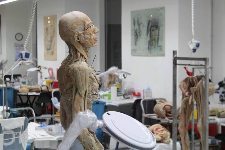 Plastinarium stworzył w 2006 roku pochodzący z Wielkopolski lekarz, patomorfolog i anatom Gunther von Hagens (urodził się w Skalmierzycach pod Ostrowem