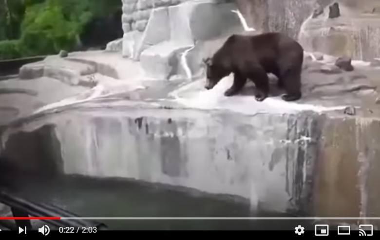 Trzy lata więzienia grożą 23-latkowi, który w czwartek wtargnął na wybieg dla niedźwiedzi w warszawskim zoo, szarpał się ze zwierzęciem i podtapiał je