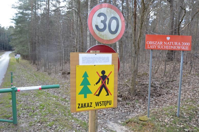 Myśliwi też nie mogą wchodzić do lasu, ale... . W Świętokrzyskiem do końca miesiąca muszą odstrzelić blisko 1000 dzików