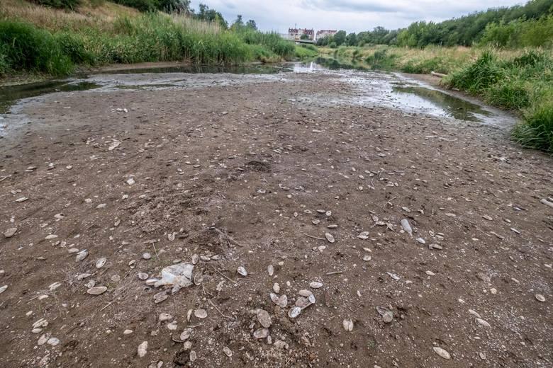 Lato 2018 i 2019 rozpieszczało tych, którzy uwielbiają zażywać kąpieli słonecznych. Jednak intensywne i ostre słońce było strapieniem dla wielkopolskich rolników, a także dla tych, którzy lubią wypoczywać i korzystać z wodnych atrakcji. Wody w rzekach i innych ciekach wody w niektórych miejscach...