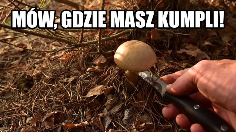 MEMY o grzybiarzach i zbieraniu grzybów!