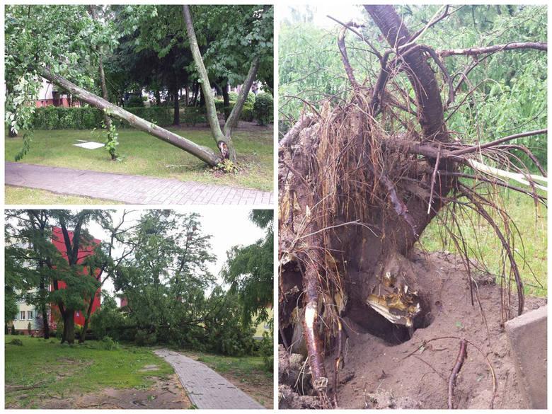 Nawałnica w Ostrołęce: drzewa połamane jak zapałki, nie ma prądu (ZDJĘCIA CZYTELNIKÓW)