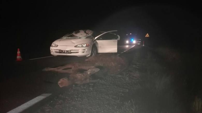 Ełk. Wypadek na DK 65. Kolizja samochodu osobowego z łosiem (zdjęcia)
