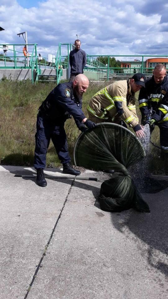 Pracownicy schroniska poinformowali o sprawie pracowników straży miejskiej w Zielonej Górze.