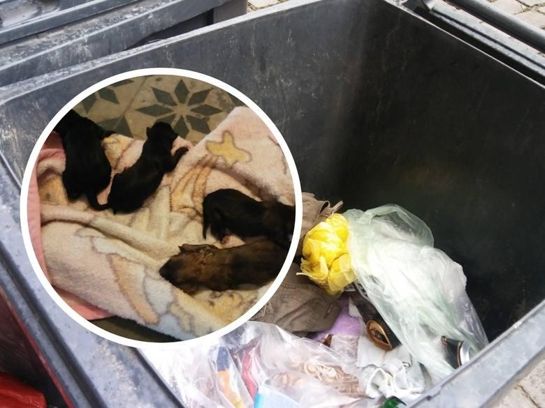 Patrol ekologiczny Straży Miejskiej w Grudziądzu otrzymał dziś rano zgłoszenie o porzuceniu jednodniowych szczeniaczków w pojemniku na odpady komunalne,