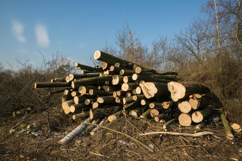 Wycinka zieleni zaczęła się już na terenach przy ul. ks. Józefa Tischnera. Pod topór idą też drzewa w Parku Lotników.