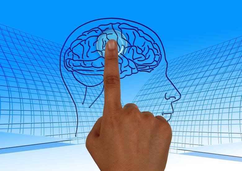 mózg, czytanie, neurony, myślenie