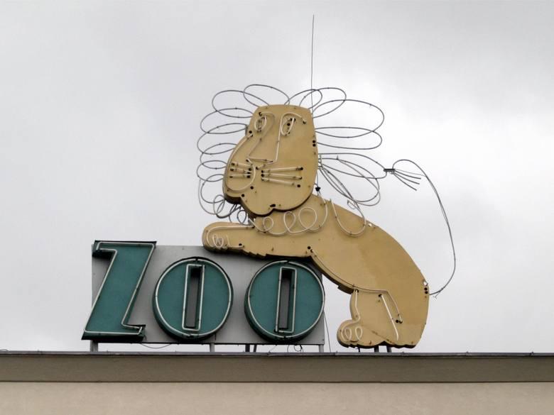 Nad bramę wrocławskiego zoo wrócił już słynny lew