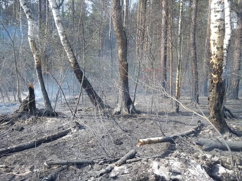 Pożar lasu w miejscowości Bójki. Do akcji wezwano samolot gaśniczy (ZDJĘCIA)