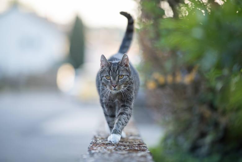 KotyW miastach żyją koty, zarówno domowe jak i bezdomne. Żywią się często resztkami wyrzuconymi na ulicę lub do źle zabezpieczonych koszy. Zepsuta żywność