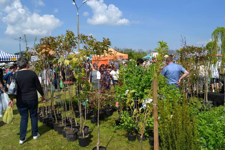 Targi ogrodnicze budzą wiosną duże zainteresowanie. Okazją do poznania nowości i zakupów roślin będzie wystawa w Sypniewie 29 kwietnia 2018