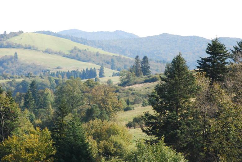 Czarna, pow. bieszczadzki, lasy porastają 62,9 proc. powierzchni gminy