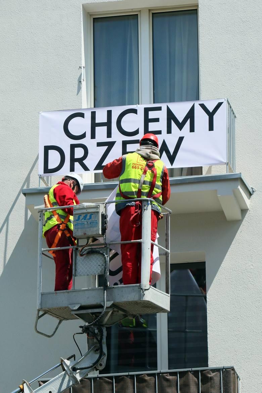 Walczą o ocalenie drzew w Lublinie. Będzie wielka manifestacja