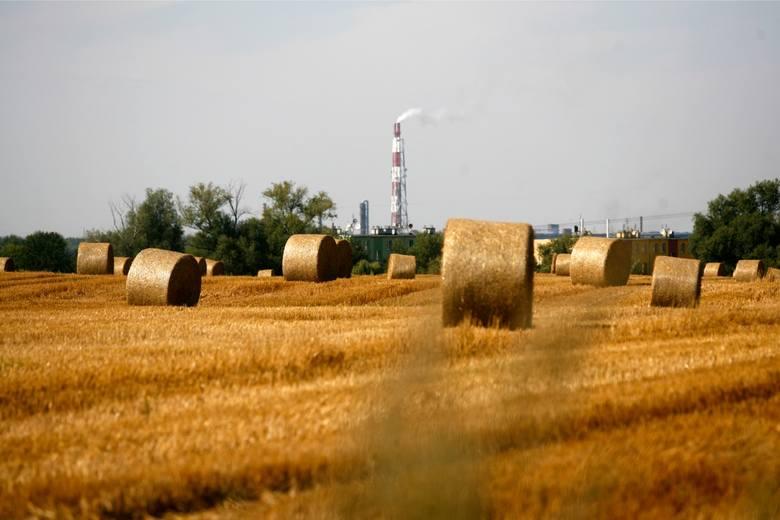 Jak wynika z danych GUS, zbiory zbóż były o 16 proc. niższe od ubiegłorocznych