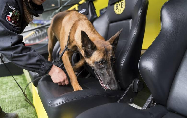 Psy tropiące, uzbrojeni policjanci - Dortmund przygotowany na mecz [ZDJĘCIA]