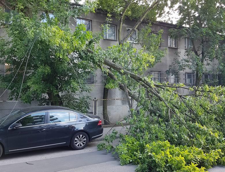 Na ul. Kasztanowej w Bydgoszczy złamało się drzewo, które spadło na ziemię. W wyniku tego zdarzenia zerwana została linia energetyczna. Flash INFO odcinek
