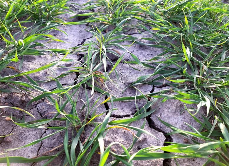 Jak wynika z prognoz ilości opadów i parowania według wskaźnika Palmera pod koniec stulecia południe Europy oraz tereny rolnicze będą znajdować się w