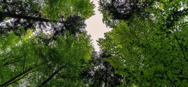 Lasy ratunkiem w upalne dni, bo drzewa obniżają temperaturę. Bez nich byłoby jeszcze cieplej!