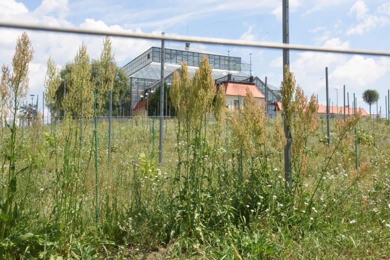 Winne Wzgórze w Zielonej Górze po remoncie. Jak wygląda roślinność pod koniec czerwca 2019?