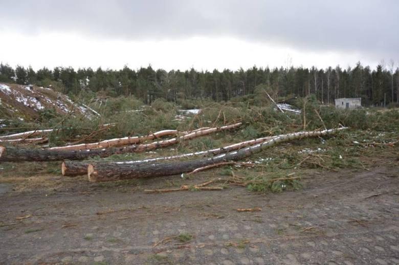 Wycięli 4 hektary lasu w Łebie. Sprawa trafiła do prokuratury [ZDJĘCIA]