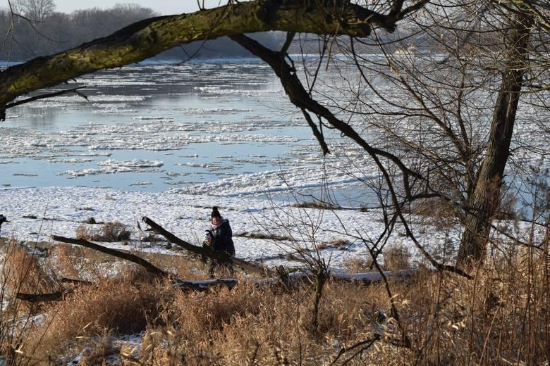Lód brzegowy i krążki śryżowe na Wiśle.