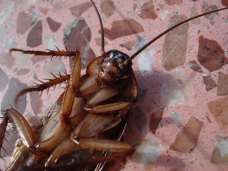 W pokojach i na korytarzach jednego z hoteli można było spotkać pełzające pluskwy i karaluchy.Następna skarga---->