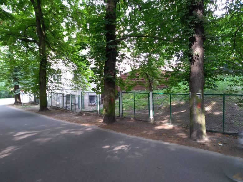 Na pniach drzew przy ul. Przybyszewskiego pojawiły się wymalowane farbą znaczki i numery. - Szykują się kolejne wycinki - dopytuje zatroskana Czytelniczka