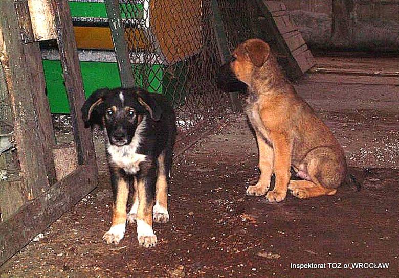 Psy na targowisku trzymane w skandalicznych warunkach [ZDJĘCIA]