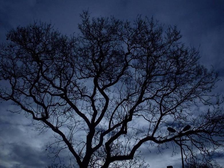 """Kraków. Las w WitkowicachZdarzenia, do których rzekomo miało dojść w lesie w Witkowicach nazywane są """"polskim Blair Witch"""". W 2001"""