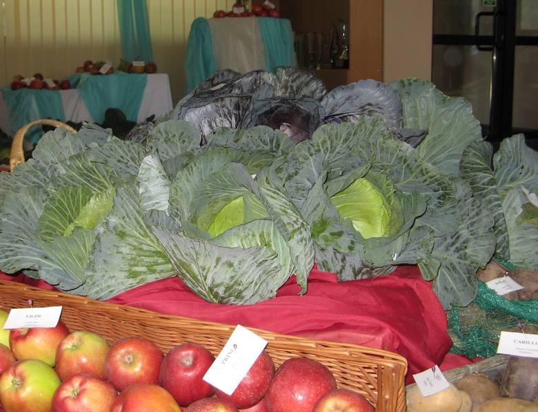 """PODR w Boguchwale organizuje konferencję """"Uprawa warzyw w gospodarstwach ekologicznych""""."""