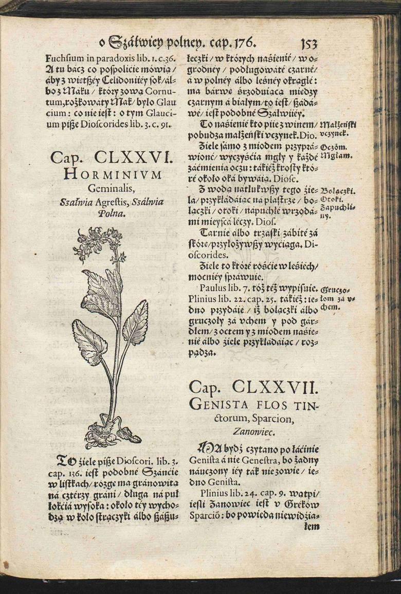 Strona z renesansowego herbarza autorstwa Marcina z Urzędowa. Hasło poświęcone szałwii.