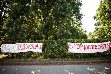 Nie będzie wyciniki drzew na skwerze przy ul. Piotrkowskiej 235/241.