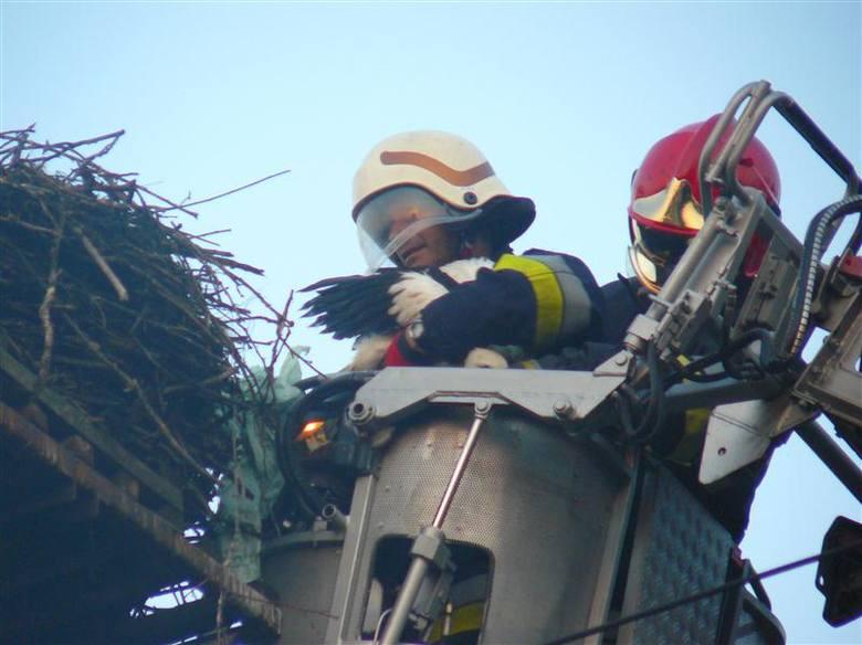 Niecodzienna akcja strażaków i weterynarza.