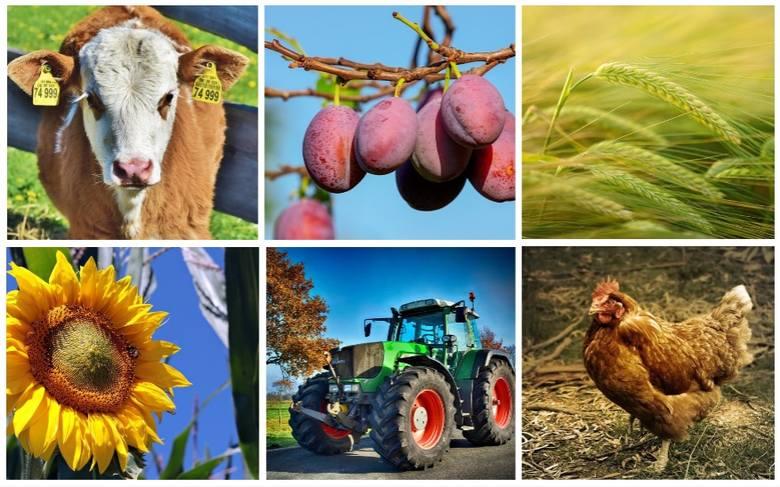Wraz z 1 stycznia 2019 roku w życie wchodzi kilka przepisów, o których warto, by wiedzieli rolnicy. Te nowości to m.in. ustawa, która podnosi limit paliwa