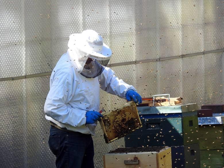 Okradał ule we wsi Lubomyśl. Zabrał 50 sztuk ramek pszczelarskich za 3 tysiące złotych