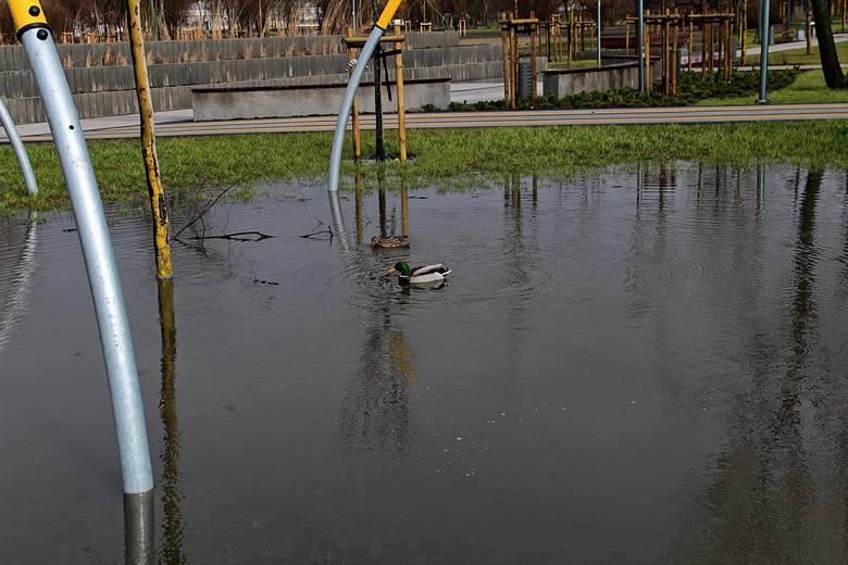 Wystarczą niezbyt intensywne opady deszczu, by w Parku Rataje powstały stawy, jeziorka, bajorka. Informacja o tym ratajskim aquaparku dotarła nawet do
