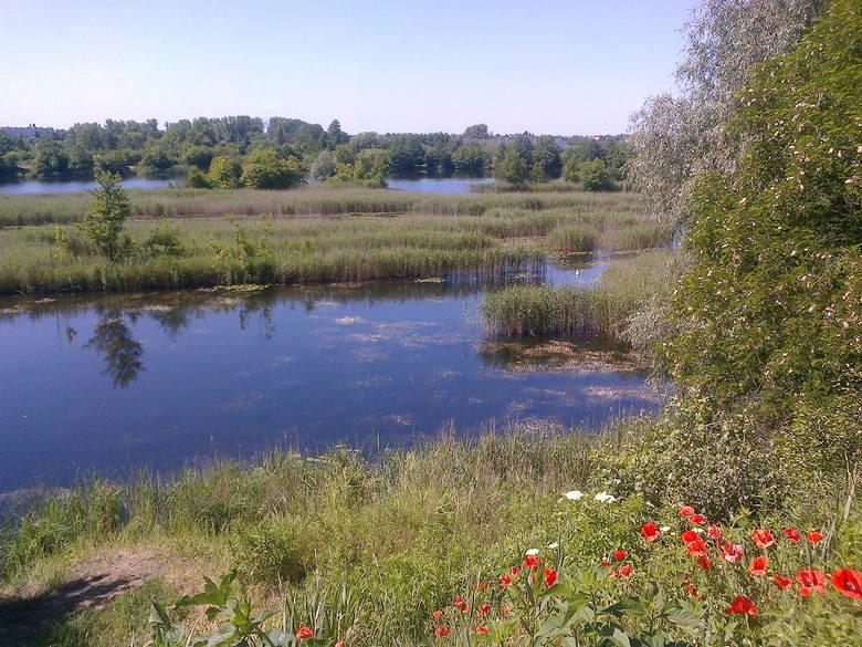 Przykładem innej poznańskiej łąki to Glinianki.Przejdź do kolejnego zdjęcia --->