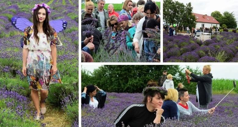 Już po raz czwarty w Lovendzie Kujawskiej w Leszczach (gmina Złotniki Kujawskie) zorganizowano Festiwal Lawendy na Kujawach.Na pięknych lawendowych polach