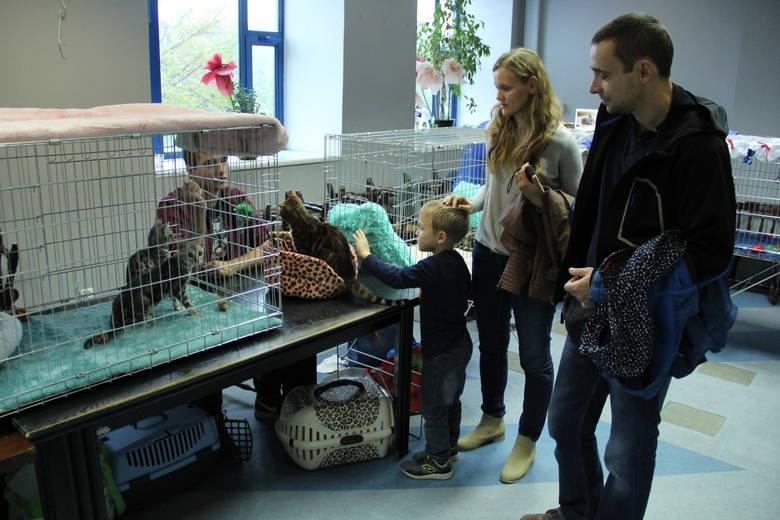Wystawa kotów w Brzezinach - przypominamy popularną imprezę